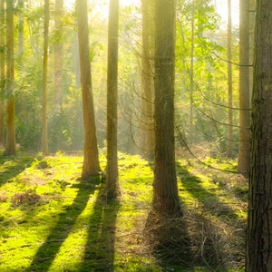 Bright daylight environment forest 240040