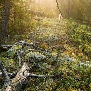 Tyresta nationalpark urskog